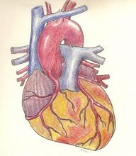 Anterior view of coronary arteries.  Free heart illustration